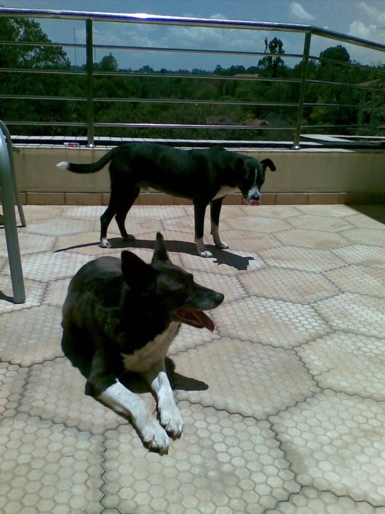 Mascha and Peanut on the balcony
