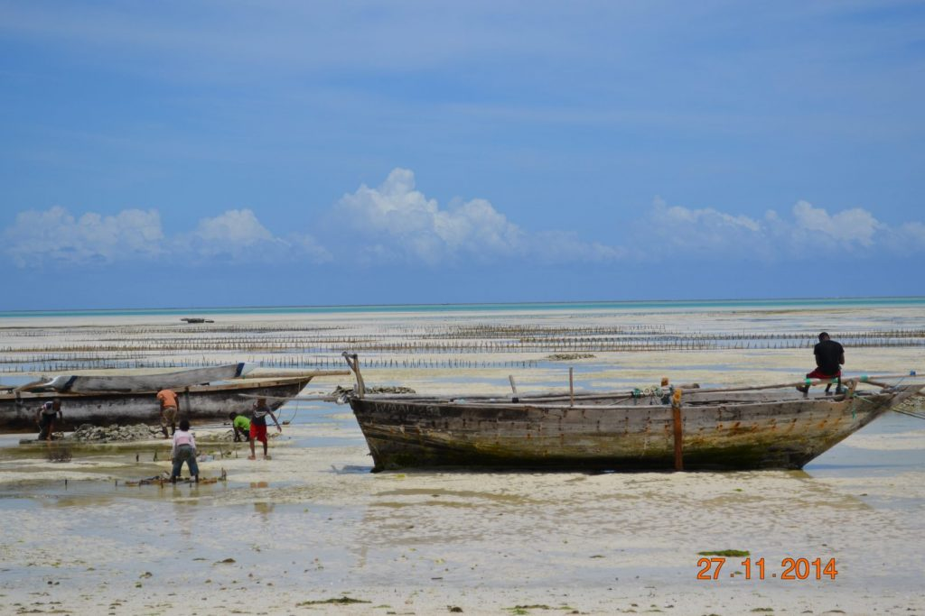 Seaweed farms in Zanzibar